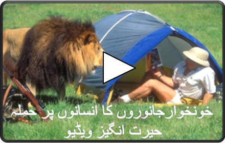 When Animal Attacks Human